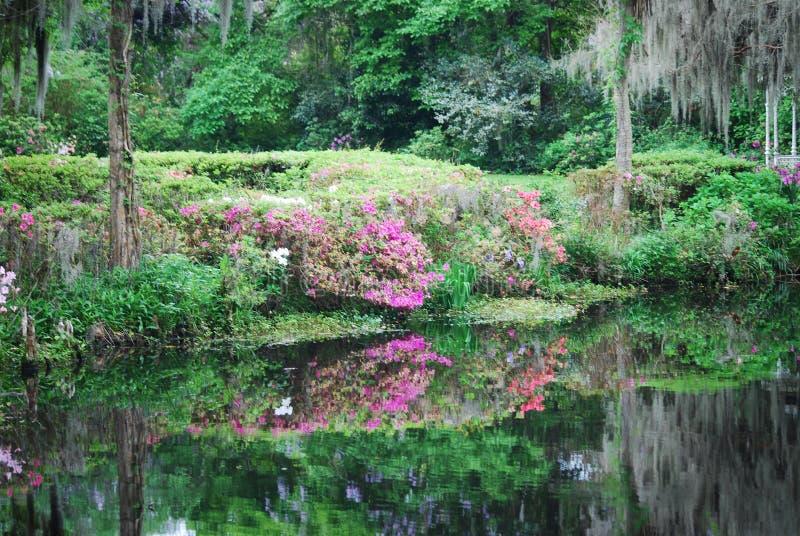 Les belles réflexions de couleurs de ressort dans le lac à la plantation et aux jardins de magnolia photographie stock