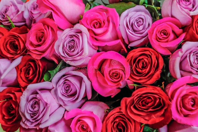 Les belles roses roses et rouges fleurit à un magasin de fleur parisien photo libre de droits