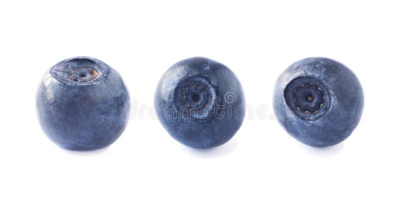 Les Bilberges isolées Fruits frits frais isolés sur fond blanc Collection Blueberries en blanc image libre de droits