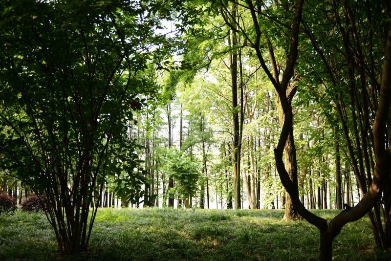 Les bois photo libre de droits