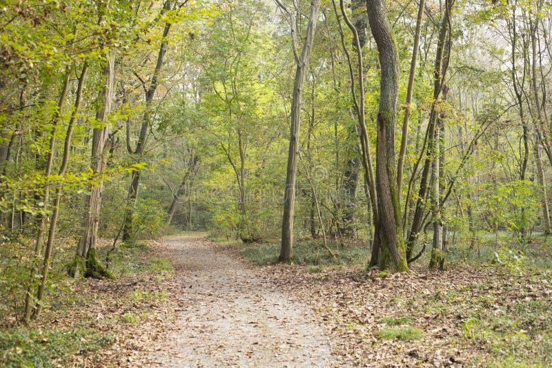 Les bois d'automne aménagent en parc en La Fagiana, Parco Tessin, le magenta, AIE image stock