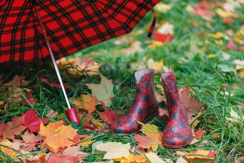 Les bottes en caoutchouc femelles avec l'érable de chute part sur l'herbe photographie stock