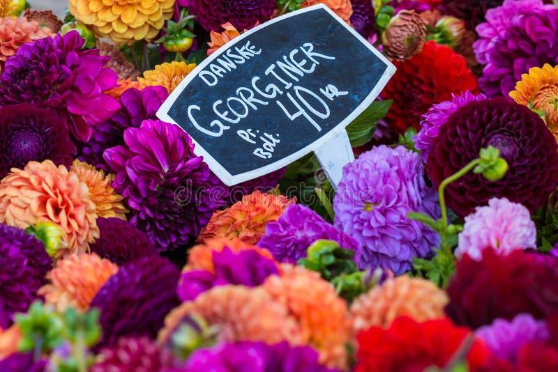 Les bouquets colorés des dahlias fleurit au marché à Copenhague, Danemark images stock
