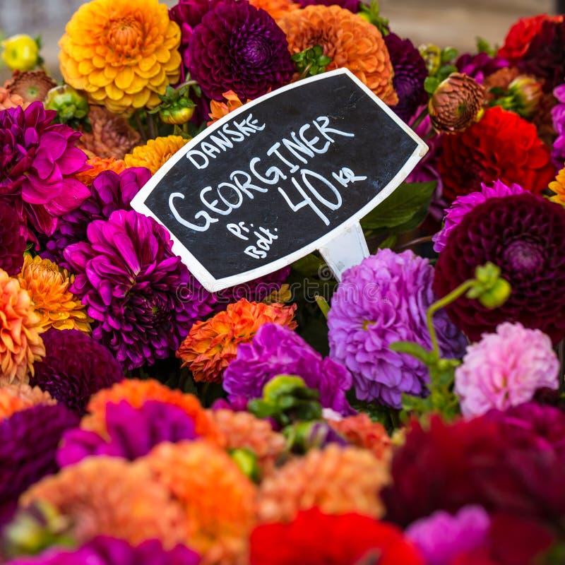 Les bouquets colorés des dahlias fleurit au marché à Copenhague, Danemark image libre de droits