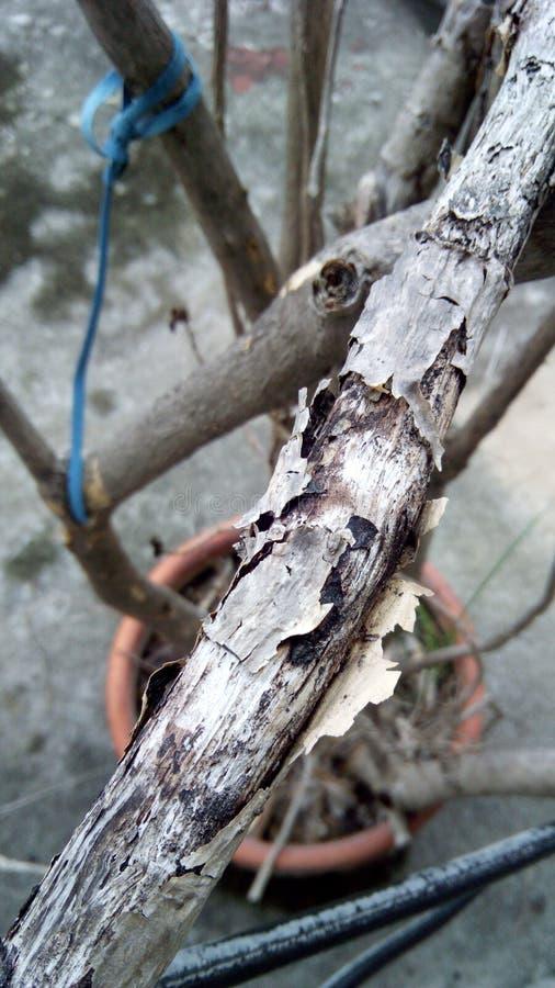 Les branches d'arbre se dessèchent photo libre de droits