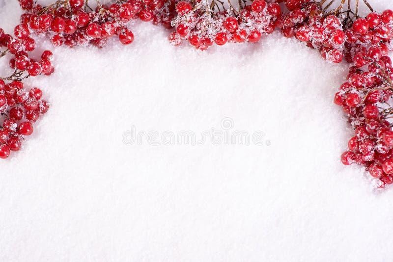 Les branches d'un guelder ont monté sur la neige avec le copyspace images libres de droits