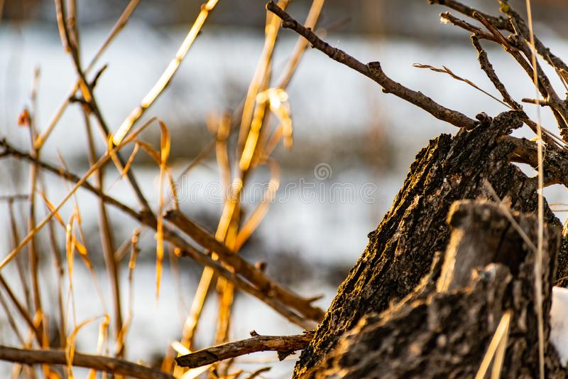 Les branches du pommier à la belle lumière du soleil au coucher du soleil Hiver, arbres nus et sans feuilles Beaucoup de branches photos stock