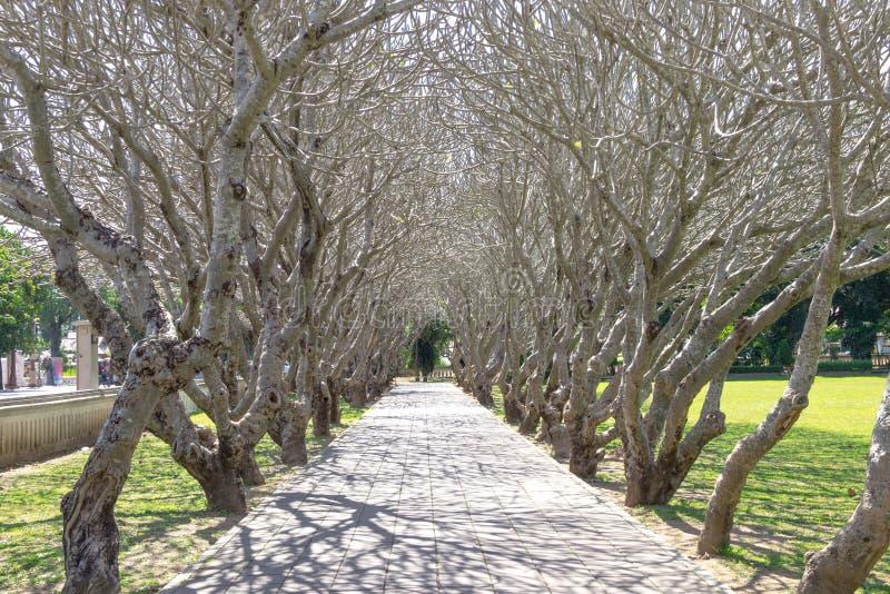 Les branches ont courbé la façade du frangipani à la province de Nan T du nord photographie stock