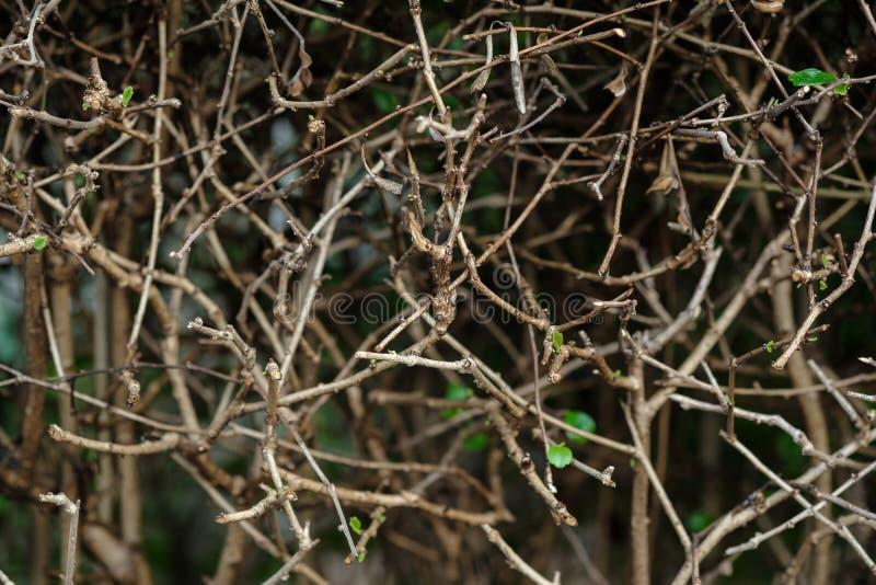 Les branches sont brun et les feuilles sont vertes photos stock