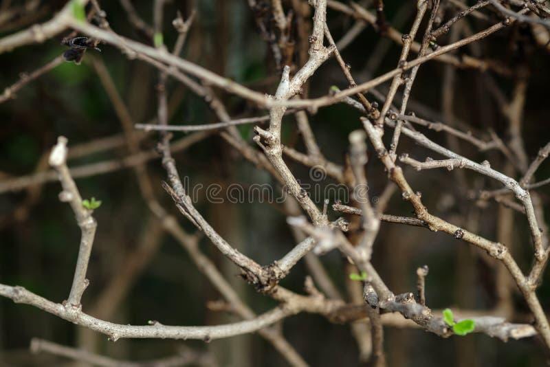 Les branches sont brun et les feuilles sont vertes photographie stock