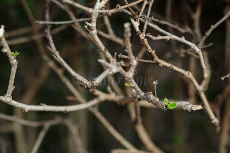 Les branches sont brun et les feuilles sont vertes image stock