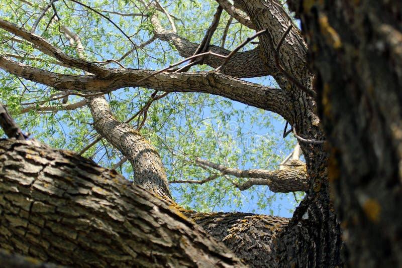 Les branches vertes d'un arbre sont contre le ciel bleu photographie stock