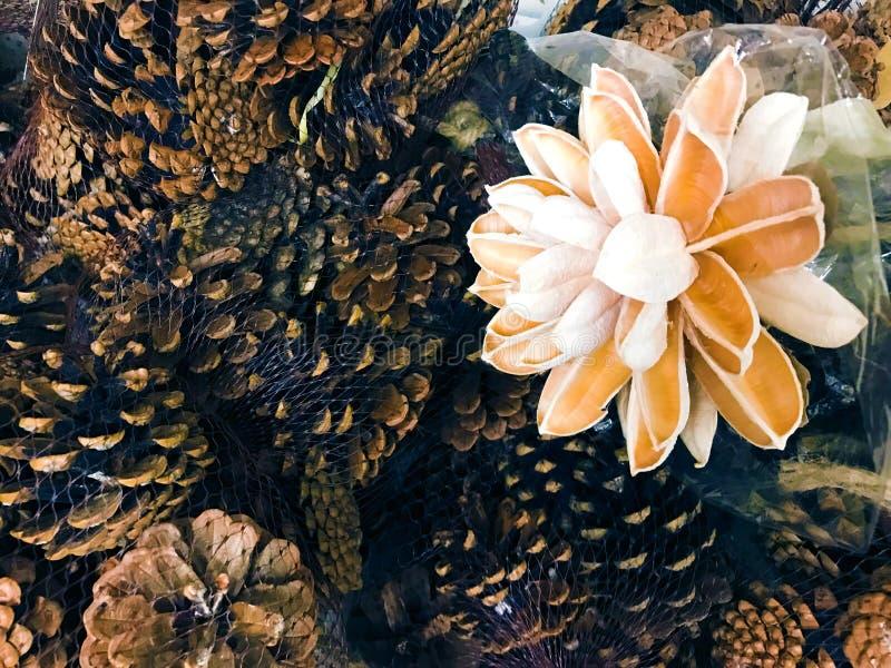 Les cônes de pin se pare avec la photo en bois de photo de décor de vintage de fleur photos libres de droits