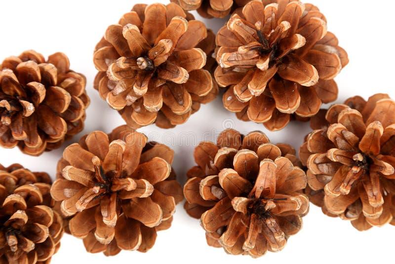 Les cônes de pin sont fond entier localisé. image libre de droits