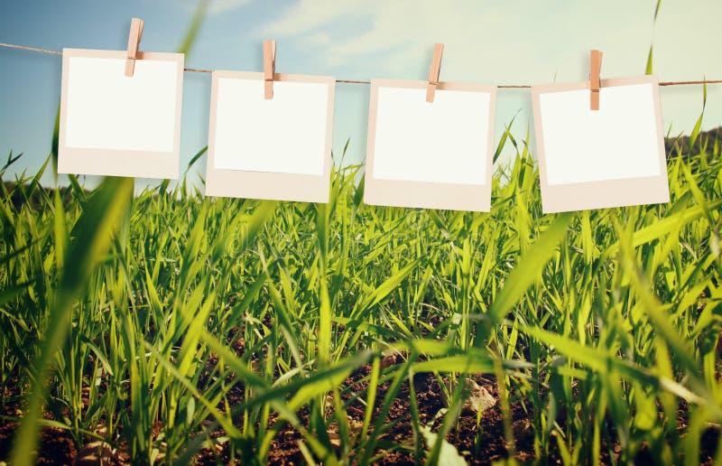 Les cadres polaroïd de photo accrochant sur une corde au-dessus du champ d'été aménagent le fond en parc photos stock