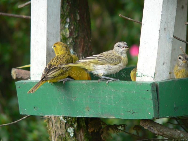 Les Canaries photos stock
