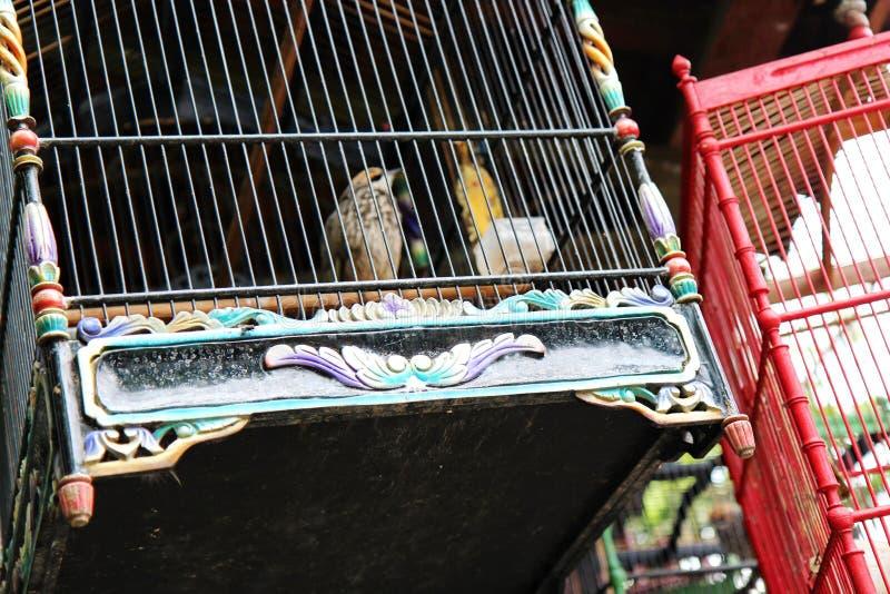 Les Canaries dans une cage photo libre de droits