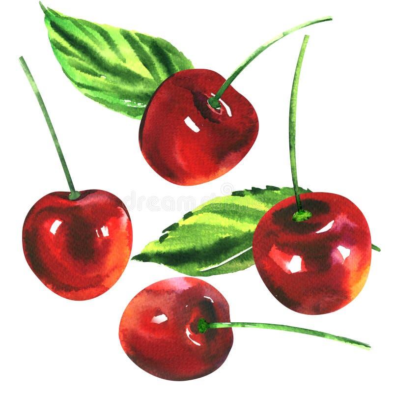 Les cerises rouges douces mûres avec les feuilles vertes d'isolement, cerise porte des fruits, illustration tirée par la main d'a illustration de vecteur