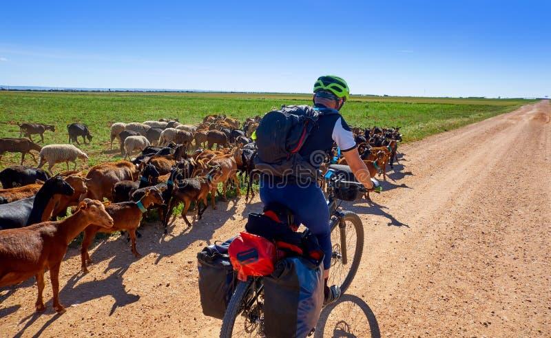 Les chèvres et les moutons s'assemblent avec le pèlerin en La Mancha de Castille photo libre de droits