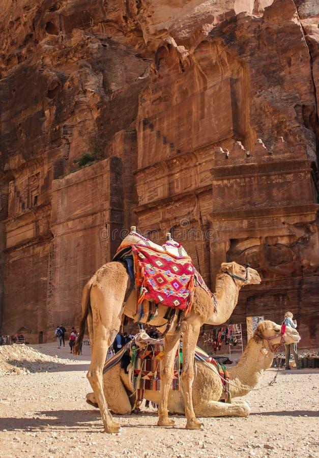 Les chameaux fatigués se reposent dans PETRA de ville de roche photos stock