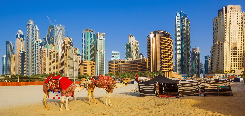 Les chameaux sur la plage de Jumeirah et gratte-ciel dans le backround à Dubaï photo stock