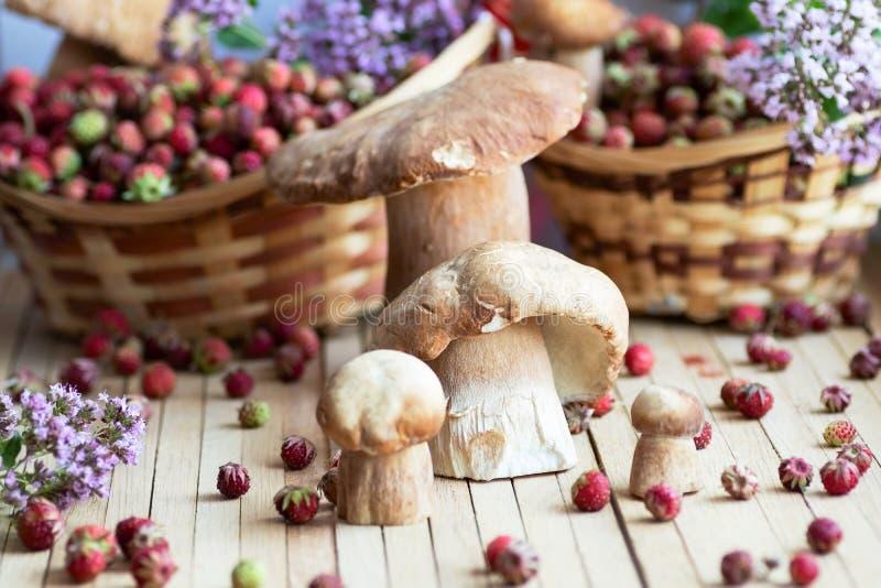 Les champignons blancs, boletus ont apporté d'une hausse dans la forêt présentée sur une table en bois naturelle entourée par des photo libre de droits