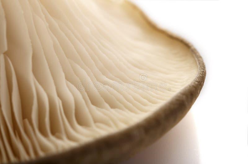 Les champignons d'huître, le côté intérieur Une partie du champignon image stock