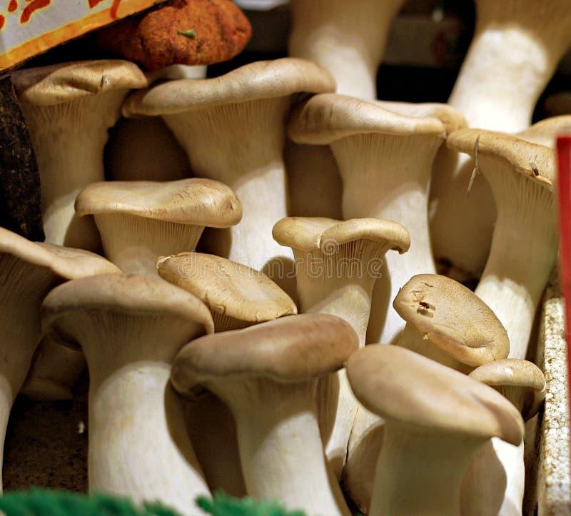 Les champignons d'huître organiques frais délicieux sont savoureux photos stock