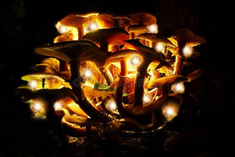 Les champignons de magie photo libre de droits