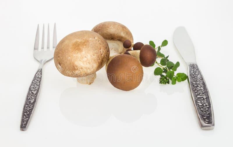 Les champignons et le hêtre brun répandent avec la fourchette et le couteau, sur le fond blanc image libre de droits
