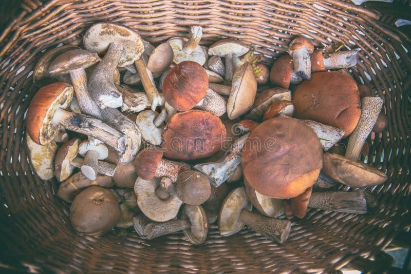 Les champignons ont fraîchement sélectionné dans la forêt dans un panier photographie stock libre de droits