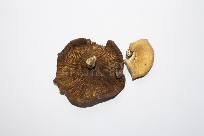 Les champignons sont sur la terre blanche image stock