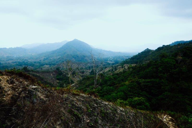 Les champs dégagés indiquent une fois que des plantations de coca les militaires depuis détruit photographie stock