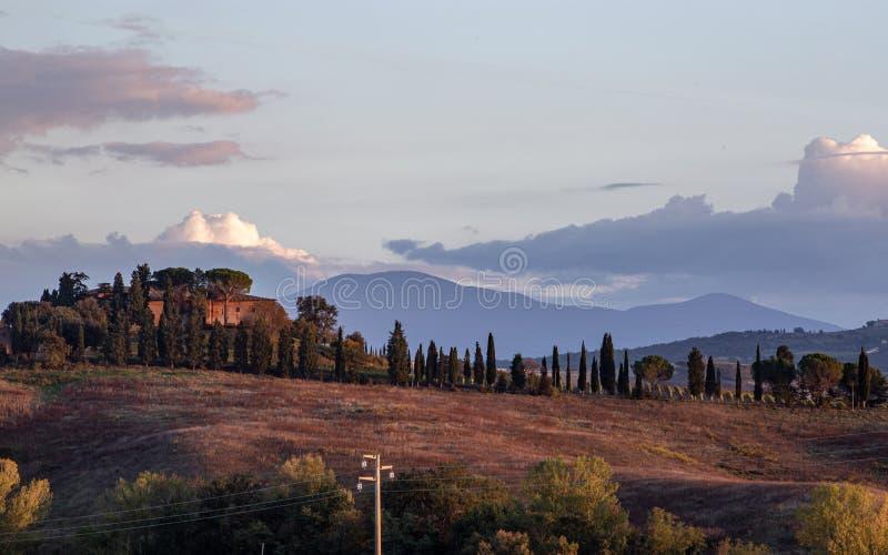 Les champs de Toscane et les oliveraies au lever du soleil photo libre de droits