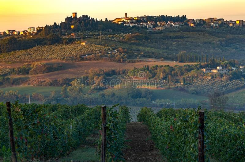 Les champs de Toscane et les oliveraies au lever du soleil photos stock