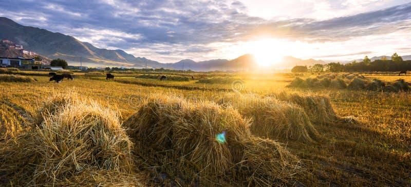 Les champs pendant le début de la matinée photo libre de droits
