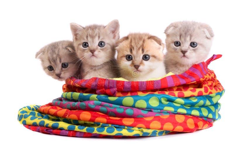 Les chatons se reposent dans un sac photographie stock