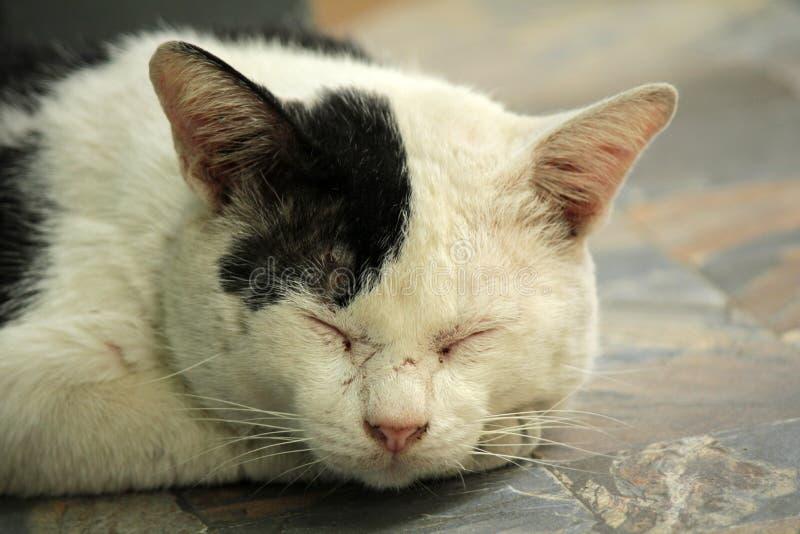 Les chats égarés seul dorment heureusement, attendant le palais pour trouver de bonnes choses dans la vie photographie stock libre de droits