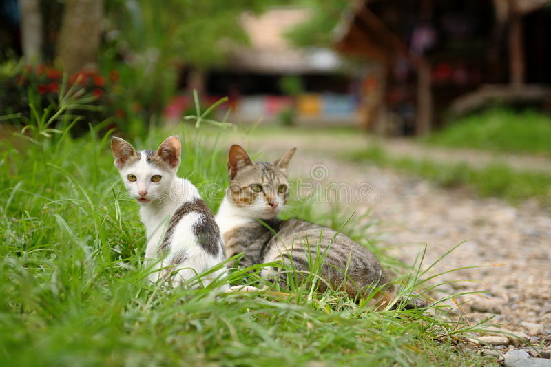 Les chats images stock