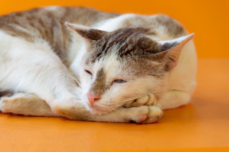 Les chats dorment photo stock
