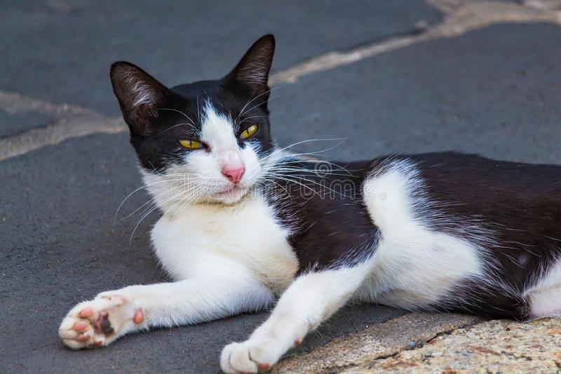 Les chats noirs sont région mignonne de jour heureusement en béton photo libre de droits