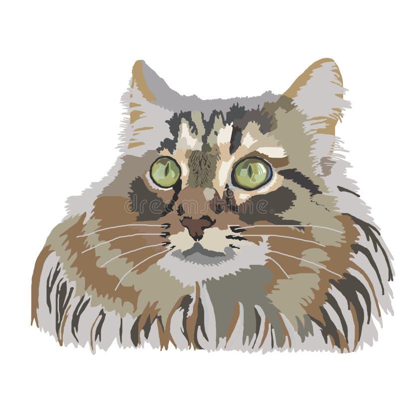 Les chats pelucheux animaux de chat choient le chaton principal dessinant l'illus mammifère domestique d'aquarelle de croquis de  illustration libre de droits
