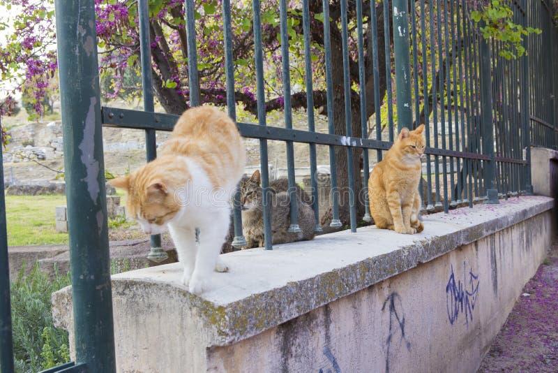 Les chats s'amusent sur une clôture photographie stock