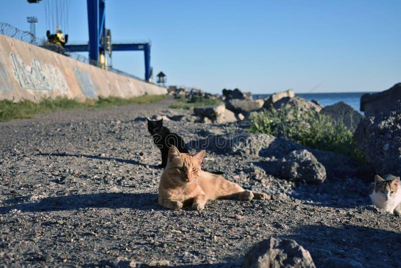 Les chats se dorent au soleil image libre de droits