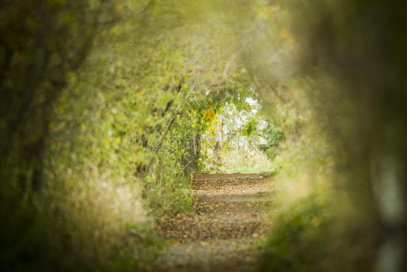Les chemins des natures photographie stock