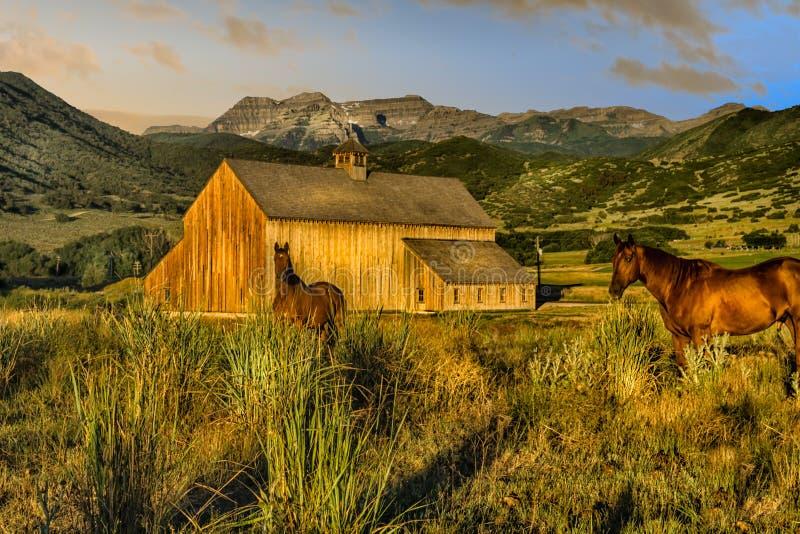 Les chevaux à la vieille montagne de grange aménagent en parc à l'aube photos libres de droits