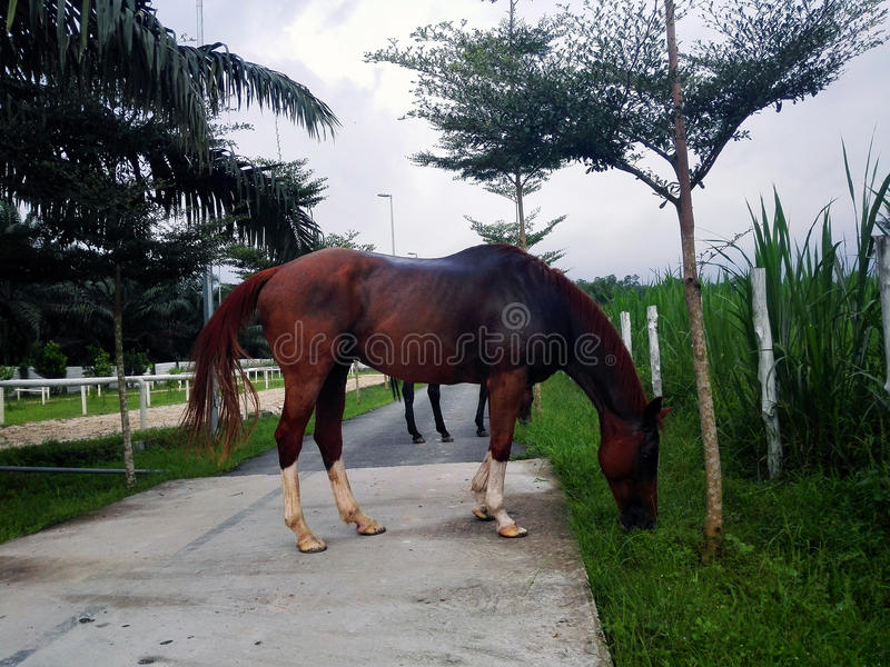 Les chevaux photographie stock