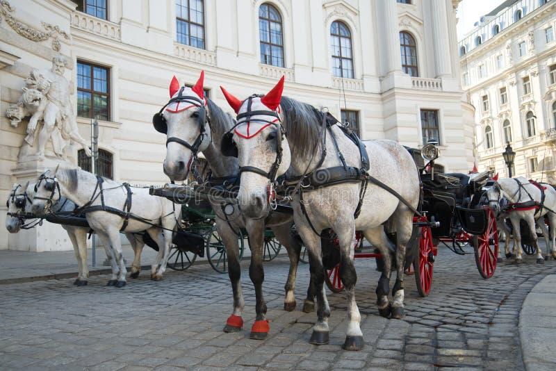 Les chevaux armés dans un fiacre Transport de touristes de Vienne photo stock
