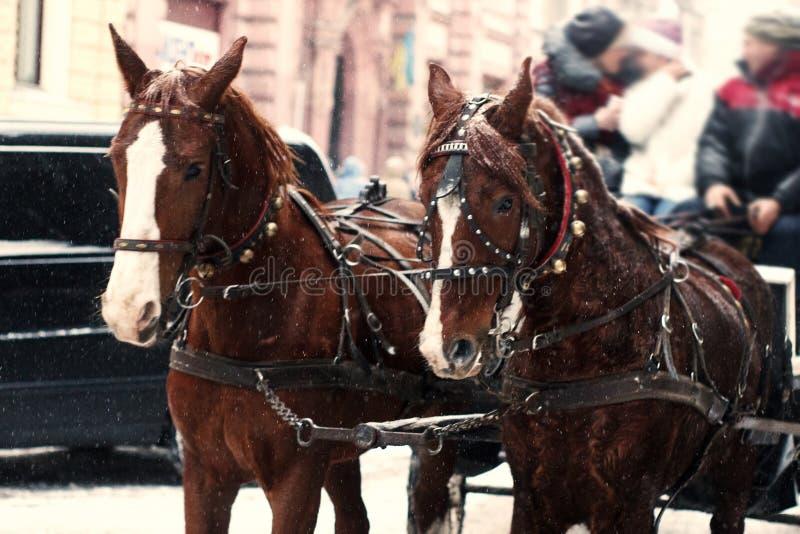 Les chevaux dans le traîneau montent dans la rue neigeuse de ville d'hiver en Europe sig images stock