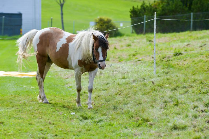 Les chevaux de cirque de carnaval errent dans le jardin image stock